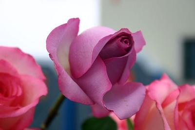 hempfest-rose Leslie Jewett.JPG