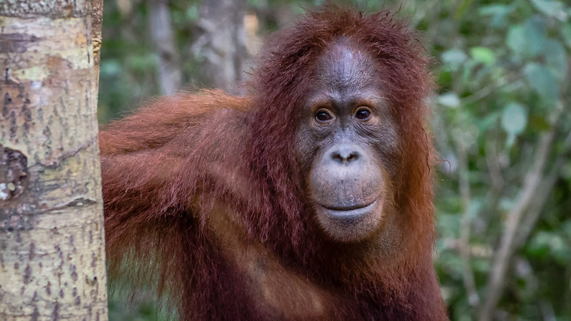 Borneo-2280.jpg