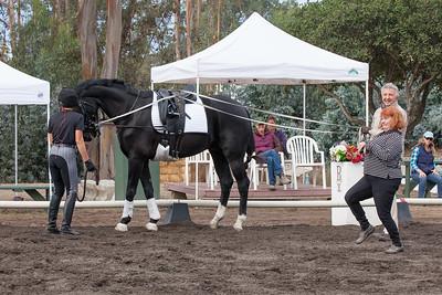 Black horse w small star