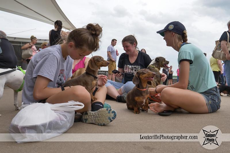 Belterra Park 2017 Wiener Dog Races-14.jpg