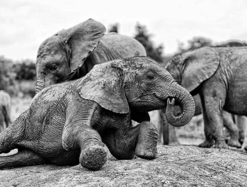 Aug312013_nairobi_blixen_elephant_m9_2856.jpg
