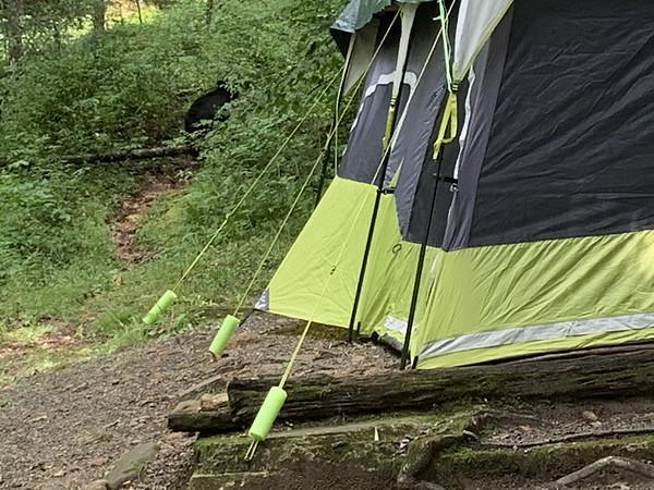 Mt Mitchell Running Camp 8/6 - 8/10