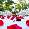 Rose petals for weddings - Ideas rose petals for weddings : Rose petals for weddings - Looking for rose petals for weddings ceremony?