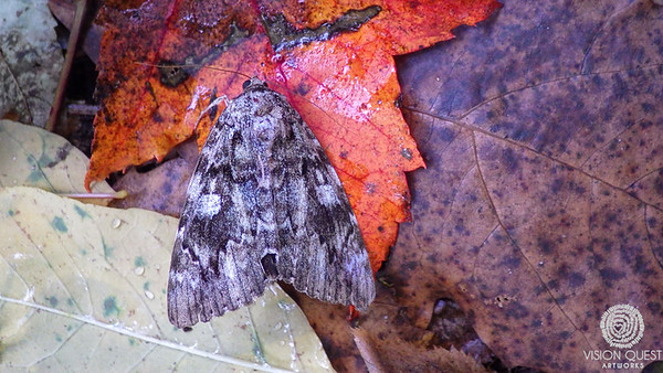 2014-17  Moths