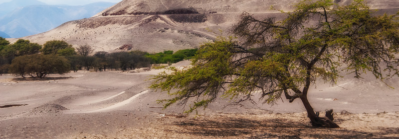 Nazca-34.jpg