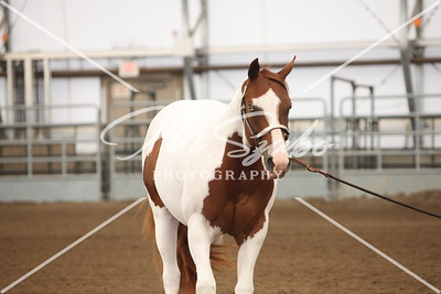 2013 APHA Olds