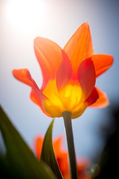 Cheekwood Flowers-20150402-20_26_37-Rajnish Gupta.jpg