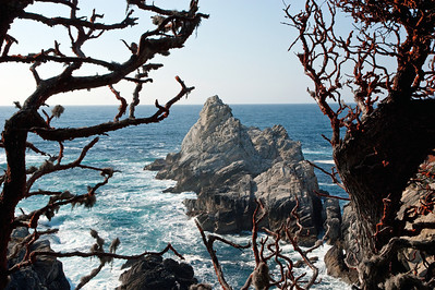 Point Lobos State Natural Reserve - May 2011