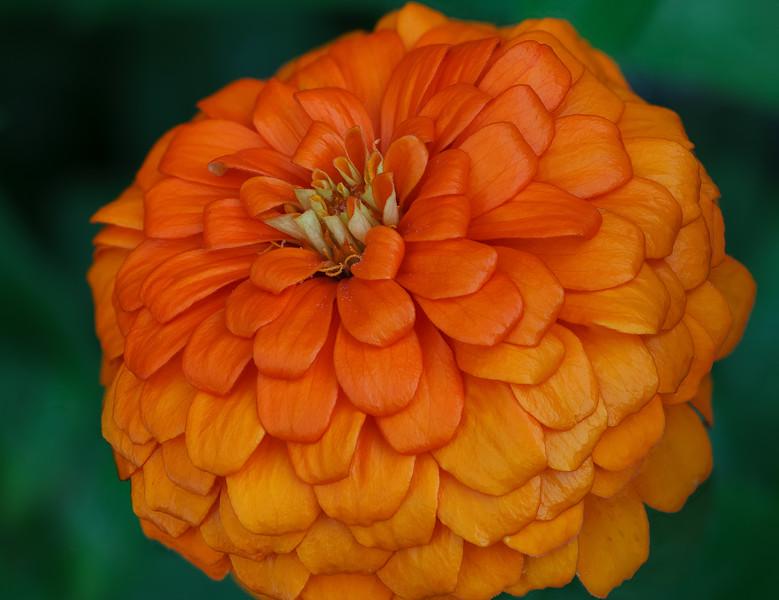 Magellan Orange