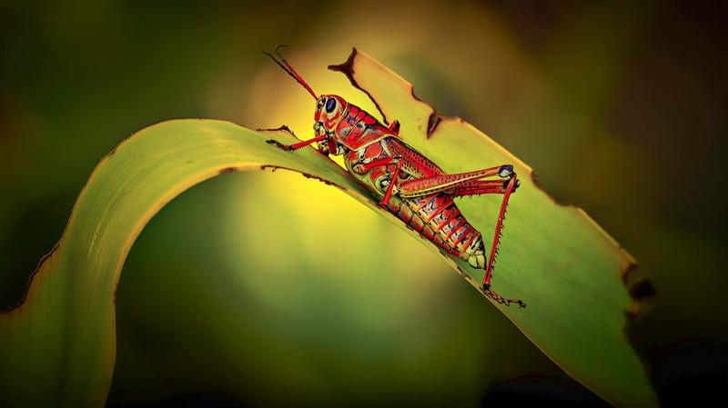 Grasshoppers 51.jpg