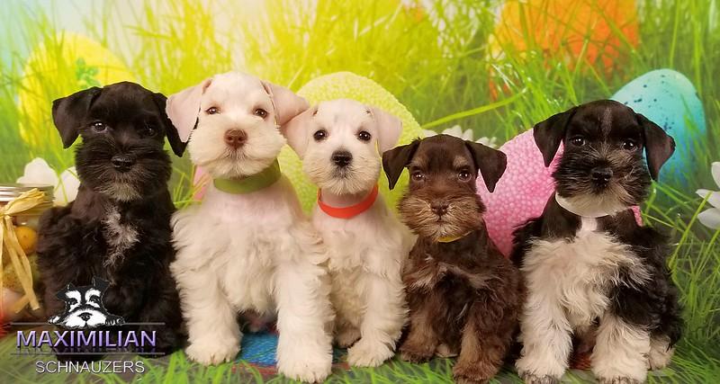 Chanel Pups 008.jpg