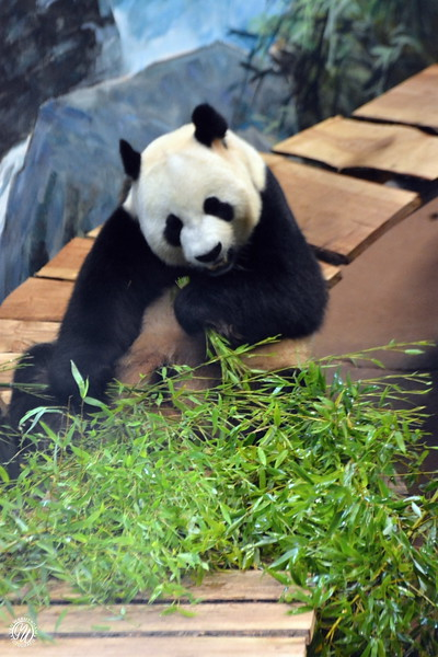 20180909 Ouwehands dierenpark GVW_8632.jpg