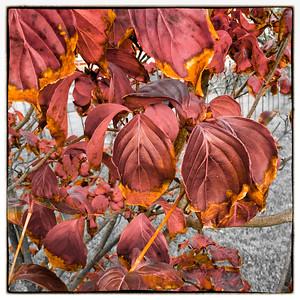 2015-10-30 Monochromatic