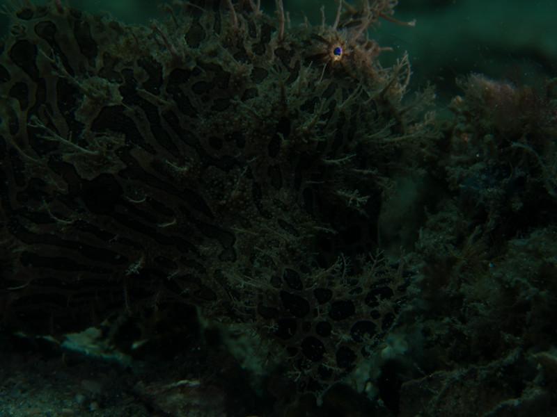 Reef BHB 2016-7080102.jpg