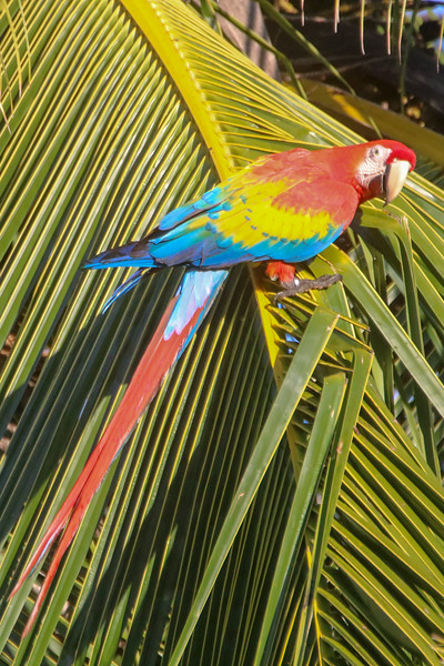 Macaw on a Palm Tree