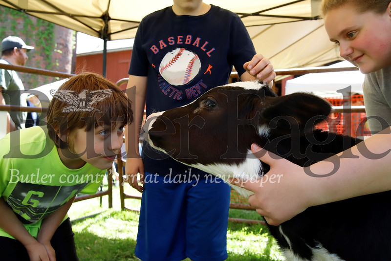 Austin Veri, 10, looks eye-to-eye with a two-year-old calf while Maggie Bowser tends to the cow. Seb Foltz/Butler Eagle