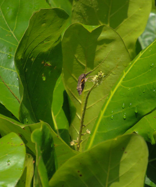 Large flying insect on a leaf