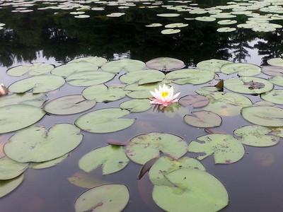 Bungay Lake paddle 2013