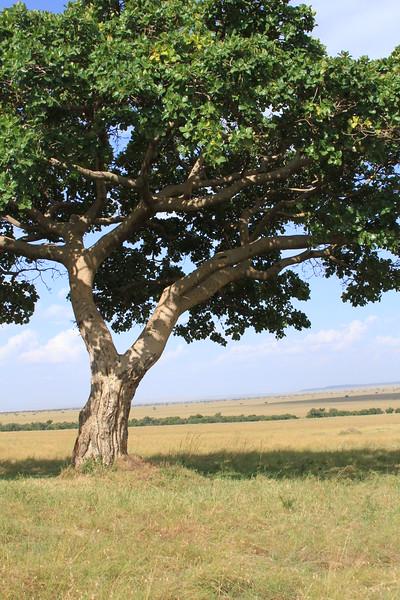 Kenya Part2 '15 012.JPG