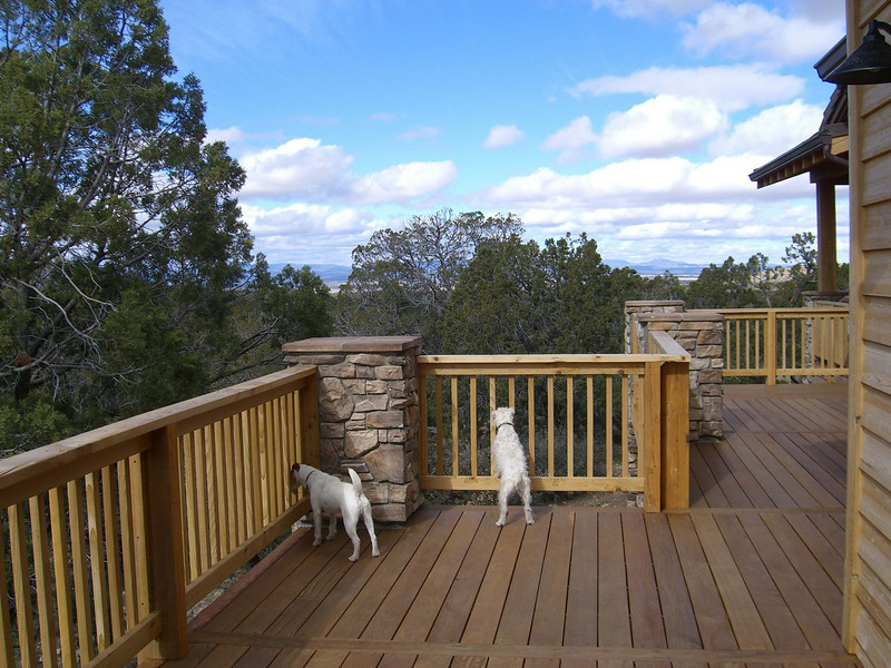 doggies on deck 1.jpg