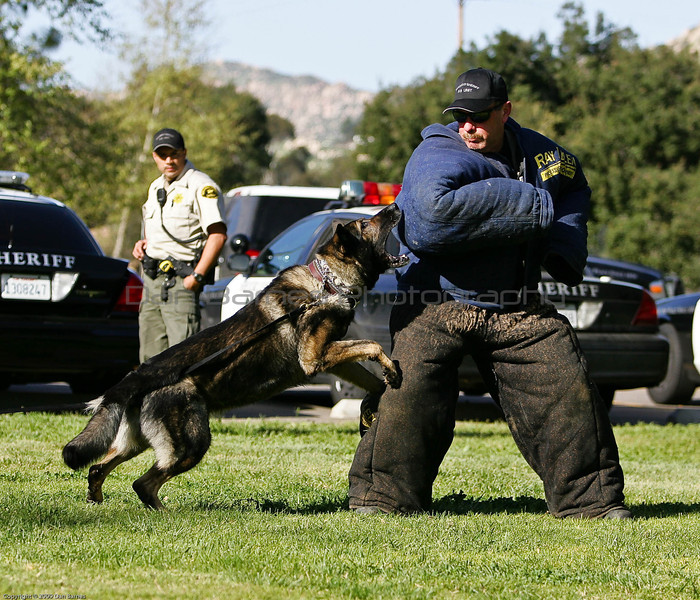 K9 Training El Monte Park