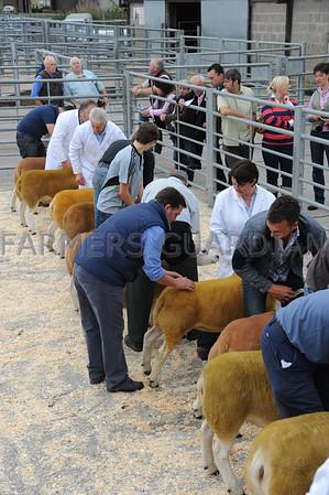 Chelford multi breed sheep Aug 2013