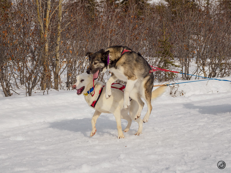 20190325_Blaire_and_Liz_Mushing_24.jpg