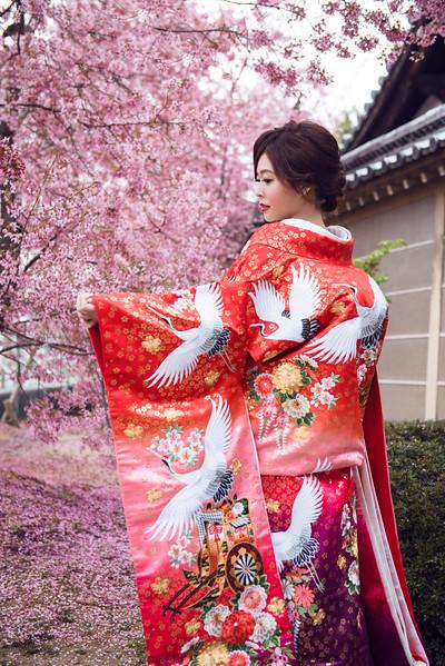 Kyoto/京都櫻花
