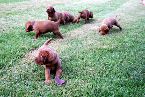 Danny x Freyja Pups - First Outdoor Trip