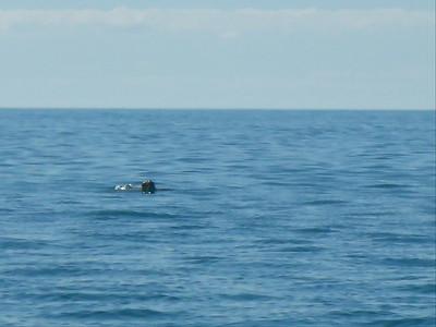 Turtle Ahoy!