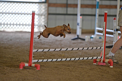 Flexible Flyers CPE Agility Trial June 25-26