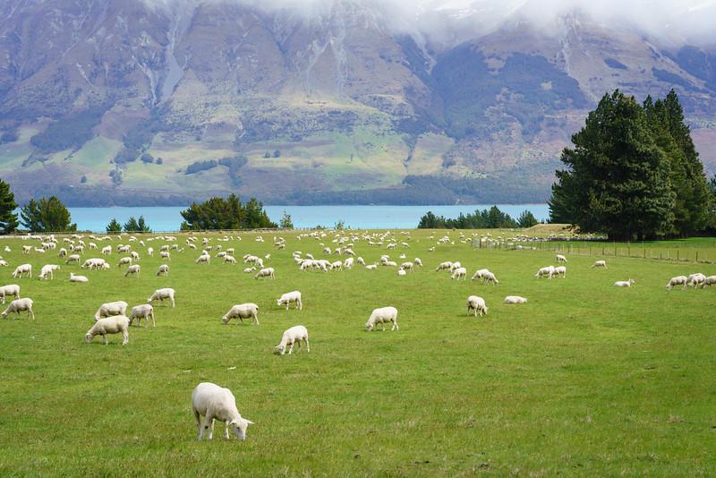 2015-10-29 New Zealand 091.jpg