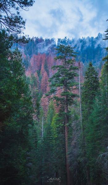 04_22-24_2017_Yosemite_greentree.jpg