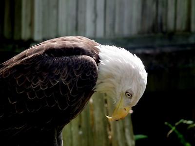 2010 9.22 Lowrey Park Zoo Tampa FL