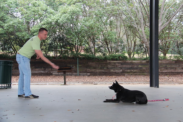 Dog On It Obedience Training Class