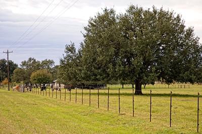 Texas Tree