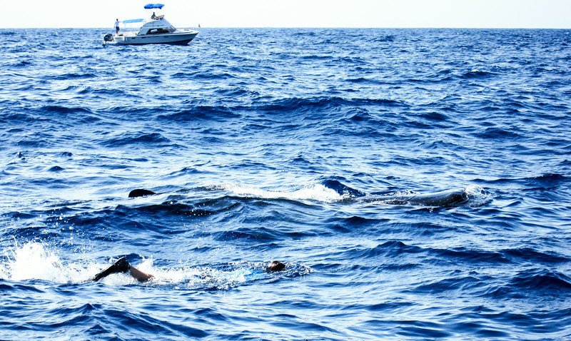 2014 Whale Shark - Cave Adventure-19.jpg