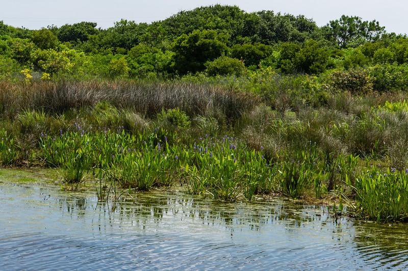 Back Bay National Wildlife Refuge