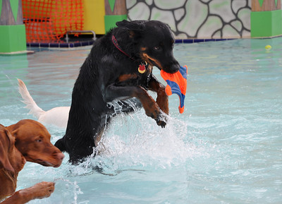 CB Smith Water Park For Dogs