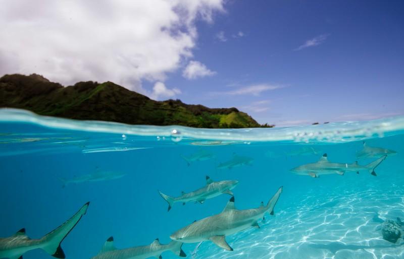 sharks-1-3.jpg
