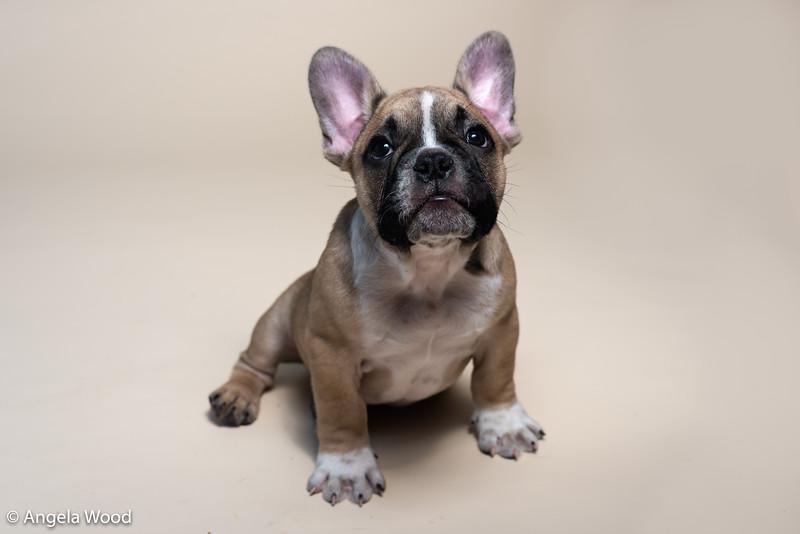 Puppies68.jpg