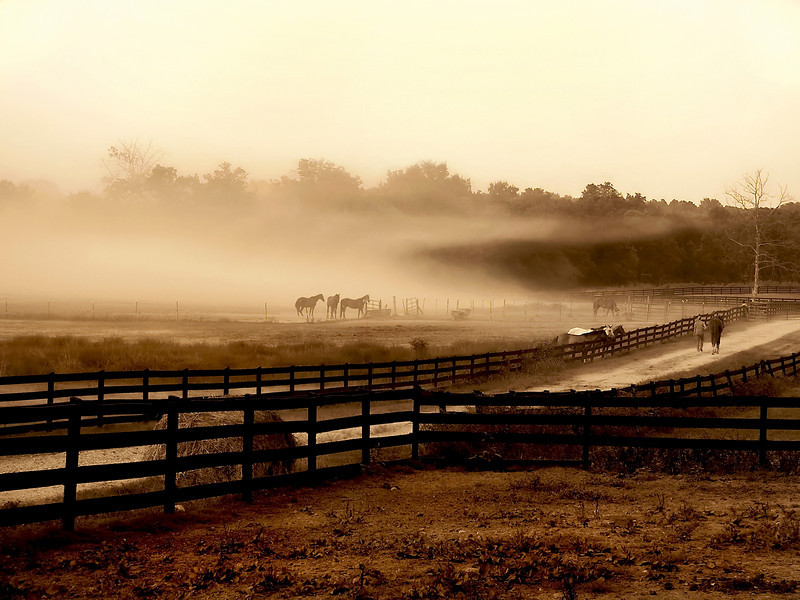 Horses standing at the edge of a field in a isolated fog cloud.