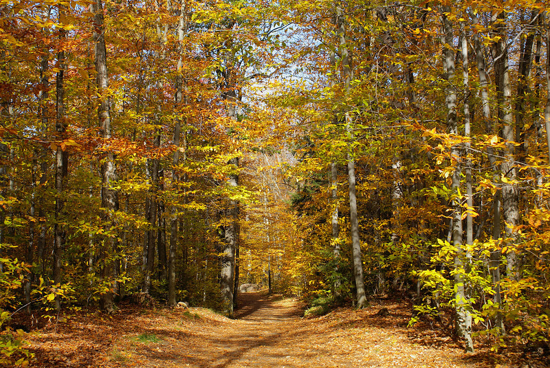 One of the many hiking trails at Parc de la Gatineau. During the winter this trail will be converted to a cross-country skiing trail.  Photo taken 11 October 2010.
