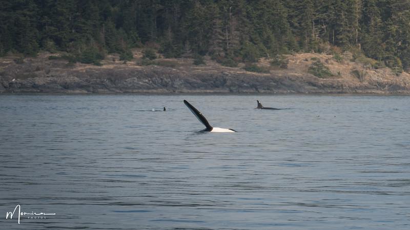 2019-08-31 - Whale Watching-1982_edit.jpg