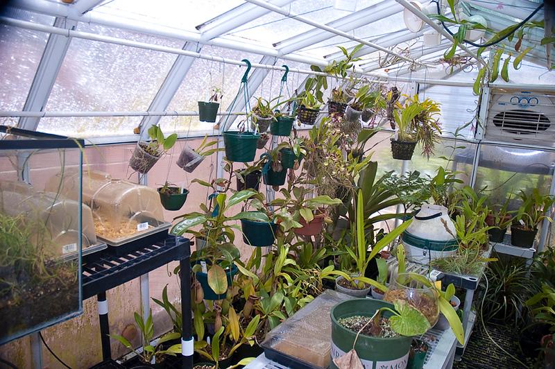 1875174276-greenhouse-L-2-18-11.jpg