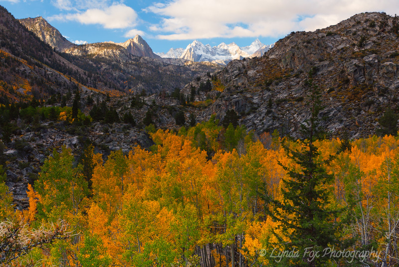 Alpine Fall Colors