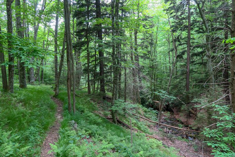 Greasy Cove Trail -- 4,980'