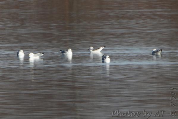 2011-02-28 Smithville Lake