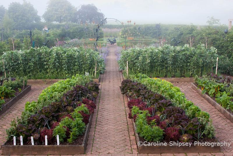The Organic Gardens, Holt Farm-2698.jpg