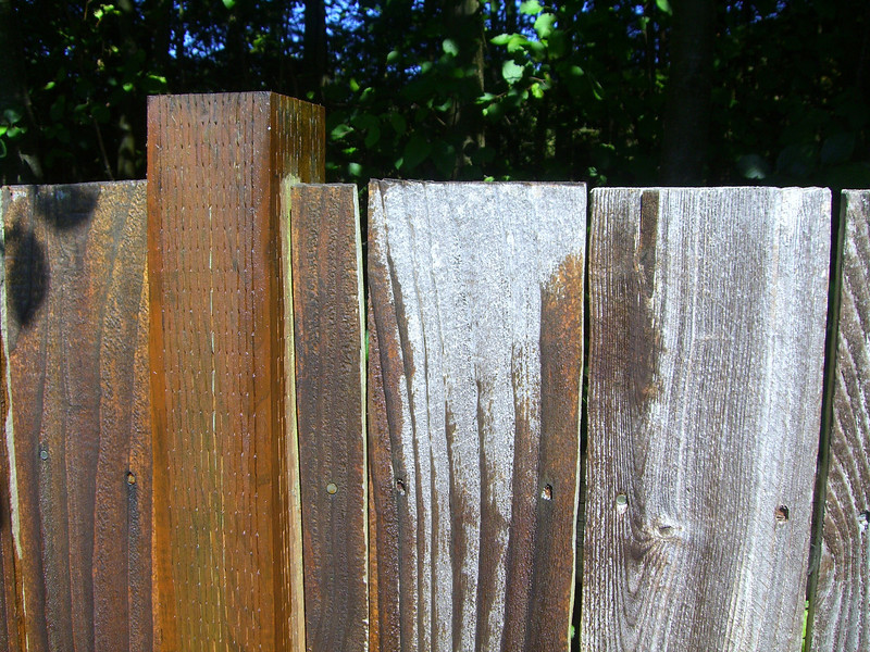 Staining the backyard fence.